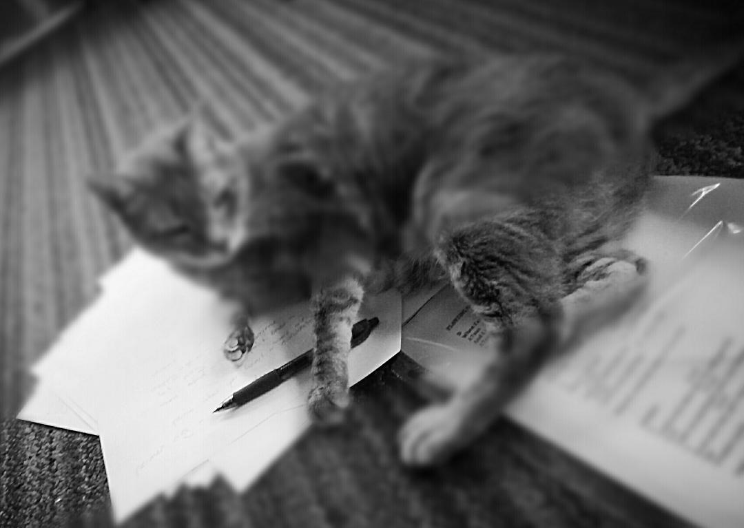 The Cat Who Tried To Write A Book ~ a short poem by Katrina Curtiss 4/18/2020