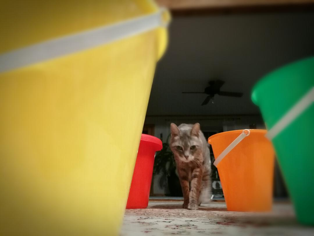 My Cat Makes A Bucket List ~ a short poem by Katrina Curtiss 4/26/2020