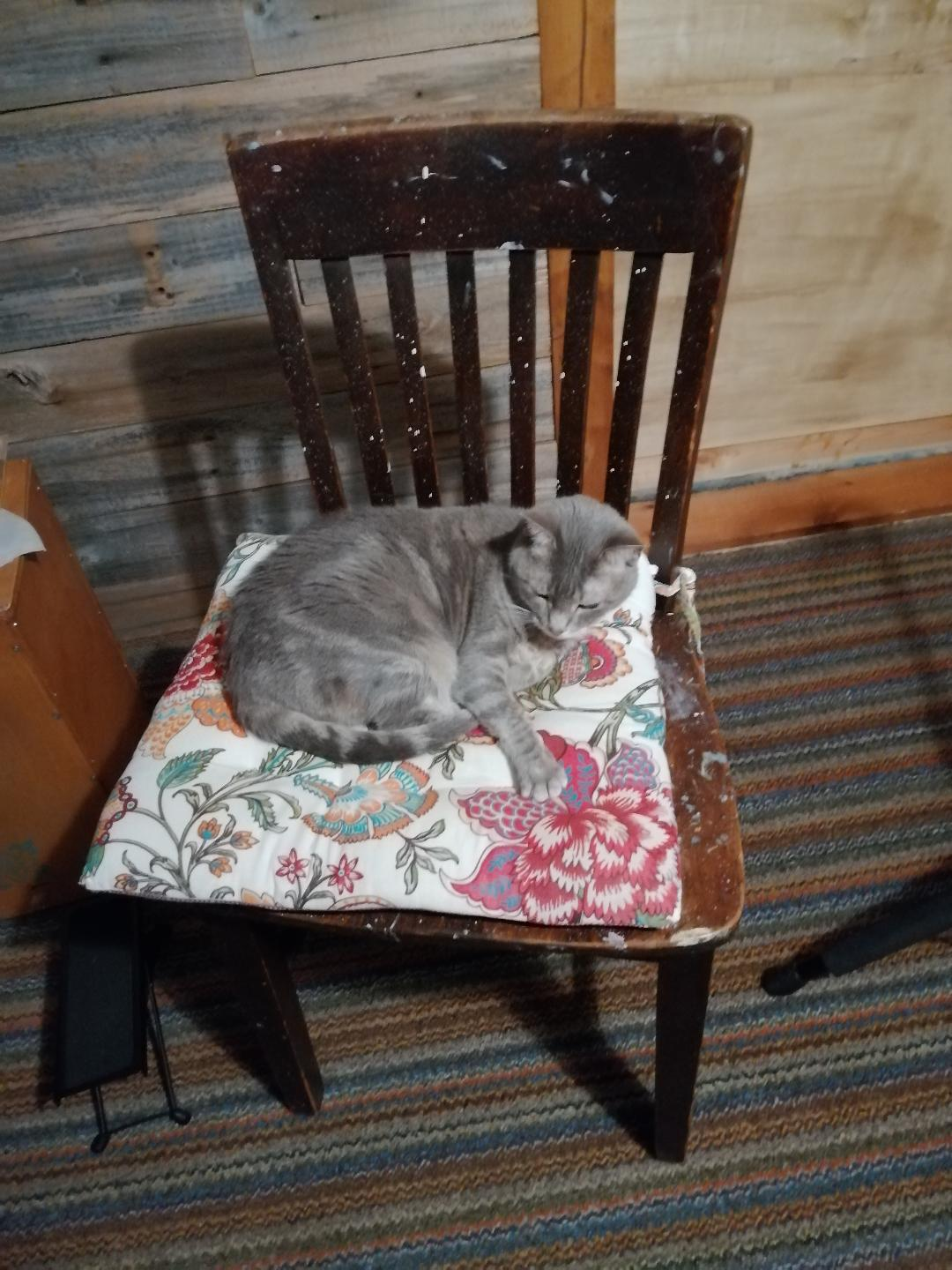 My Cat Campaigns To Be Chairman Of The Bored ~ a short poem by Katrina Curtiss 4/14/2020
