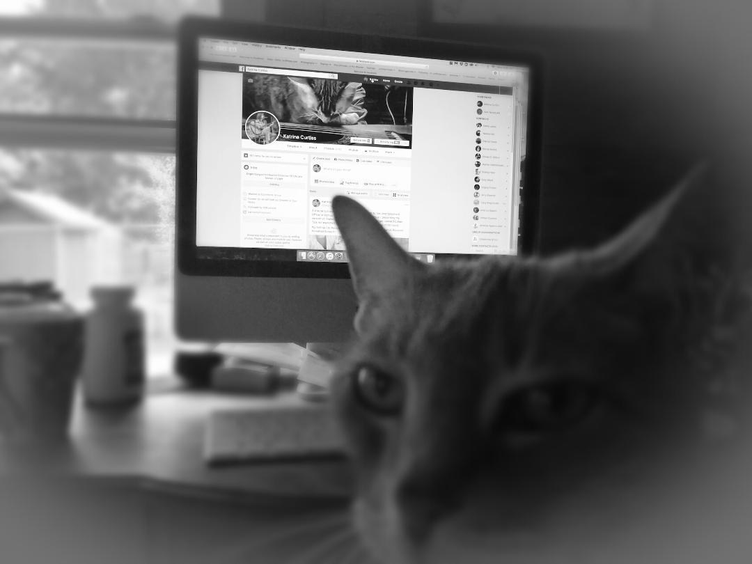 My Cat Takes Over My Facebook Page ~ a short poem by Katrina Curtiss 4/22/2020