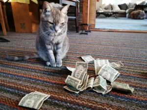 My Cat Gets A Stimulus Check ~ a short poem by Katrina Curtiss 4/15/2020