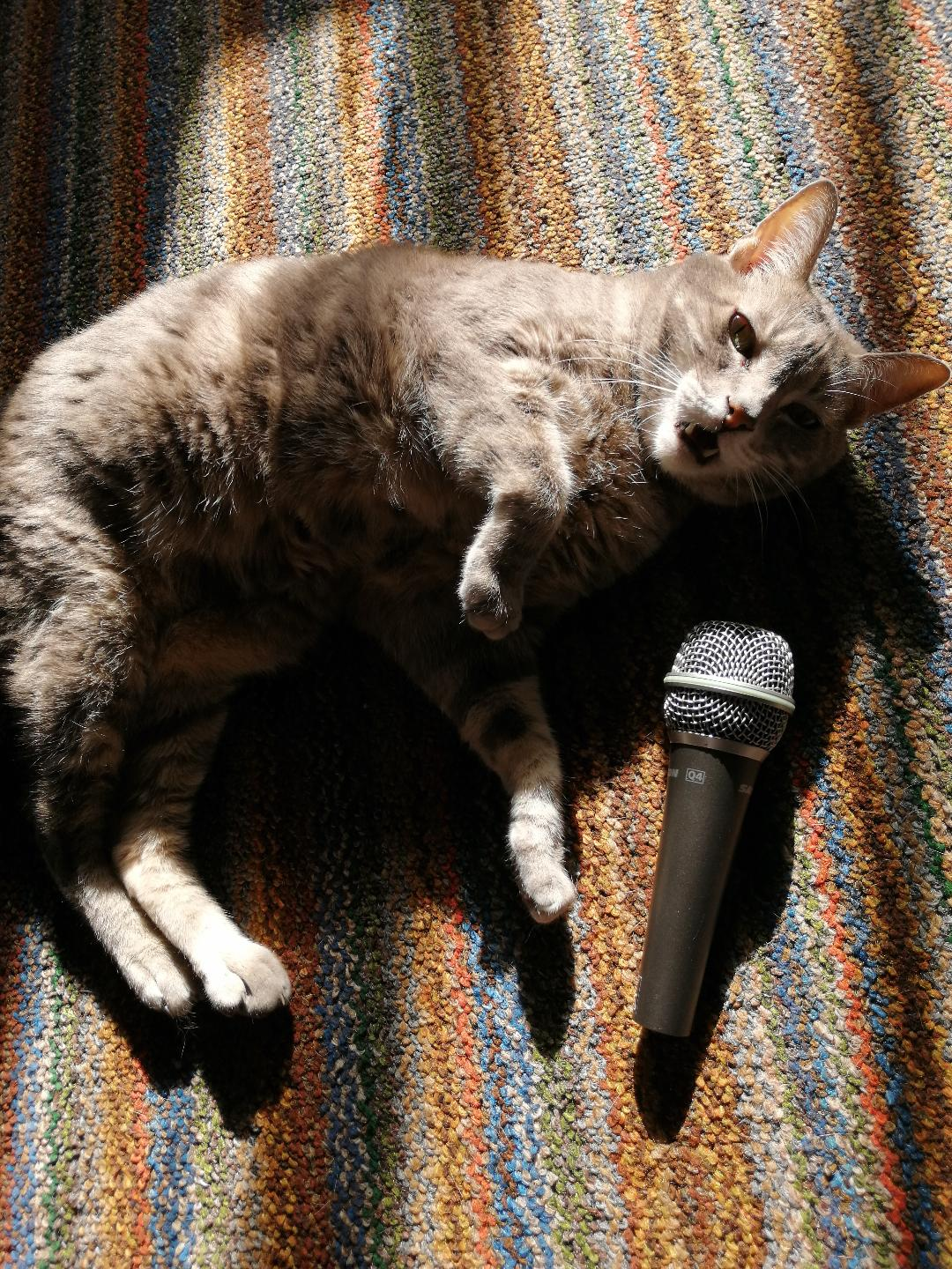 The Cat Who Tried To Sing ~ a short poem by Katrina Curtiss 4/13/2020
