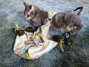 My Cat Wants To Go To The Beach ~ a short poem by Katrina Curtiss 4/24/2020