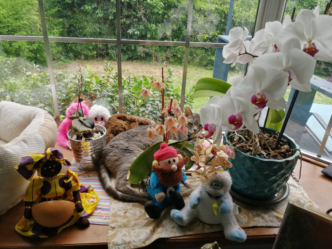 "My Cat Plays ""Where's Waldo"" ~ a short poem by Katrina Curtiss 5/27/2020"