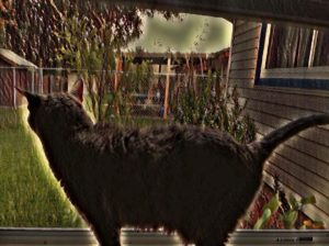 My Cat And Her Country ~ a short poem by Katrina Curtiss 5/4/2020