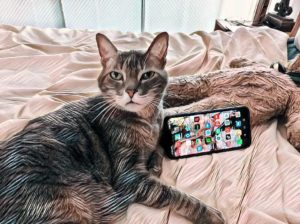 My Cat Wants A Phone Of Her Own ~ a short poem by Katrina Curtiss 5/22/2020