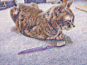 My Cat Loses Her Favorite Toothbrush ~ a short poem by Katrina Curtiss 5/19/2020