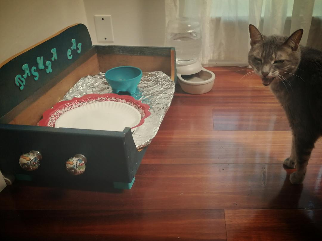 My Cat Has A Dinner Drawer ~ a short poem by Katrina Curtiss 5/18/2020