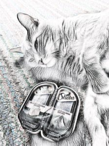 Read more about the article My Cat Protests for Pâté ~ a short poem by Katrina Curtiss 6/4/2020