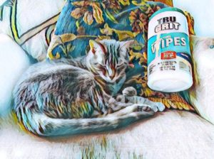 My Cat And Her Disinfecting Wipes ~ a short poem by Katrina Curtiss 6/16/2020
