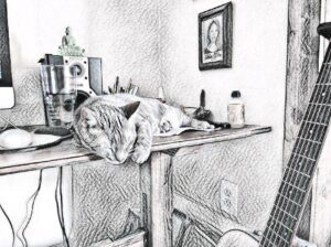 My Cat On Father's Day ~ a short poem by Katrina Curtiss 6/21/2020