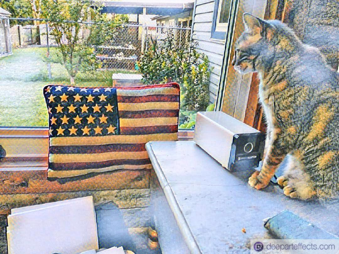 My Cat And The 4th Of July ~ a short poem by Katrina Curtiss 7/3/2020