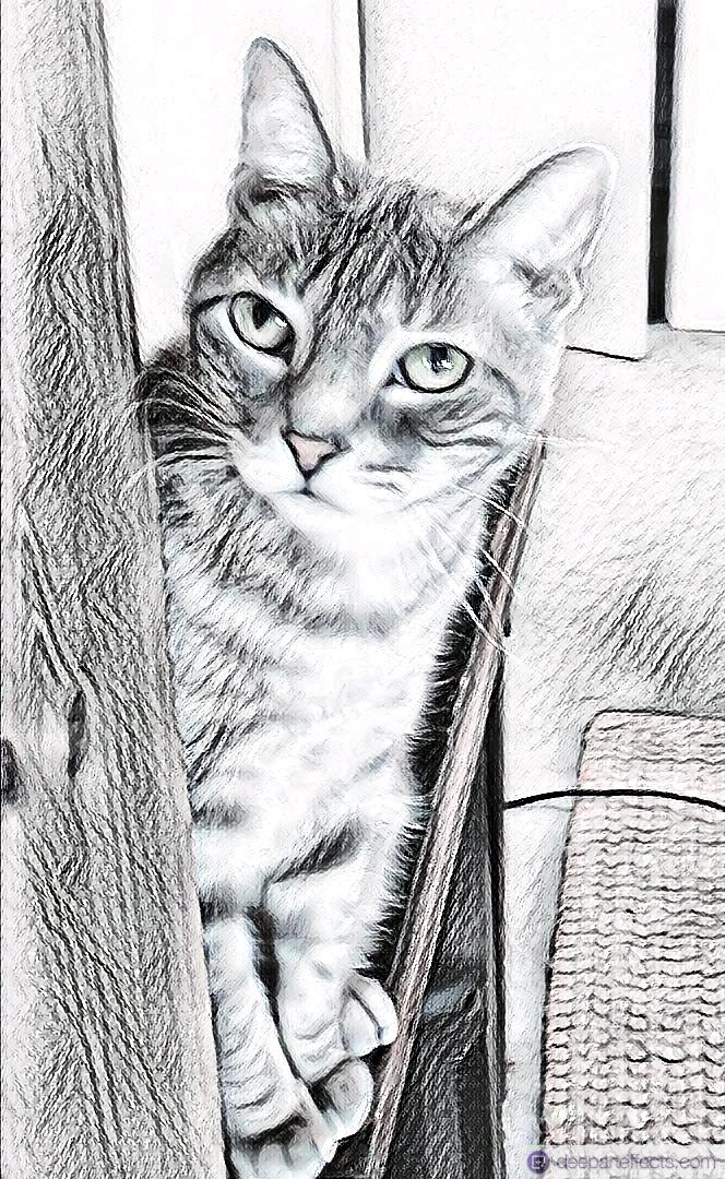 You are currently viewing My Cat And Her Name ~ a short poem by Katrina Curtiss 7/17/2020