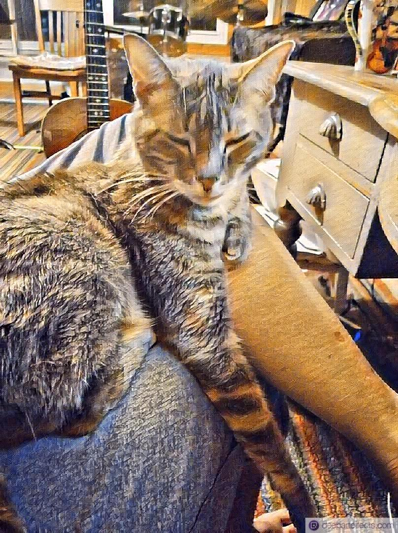 Read more about the article Me and My Cat at 3:35am ~ by Katrina Curtiss 7/1/2020