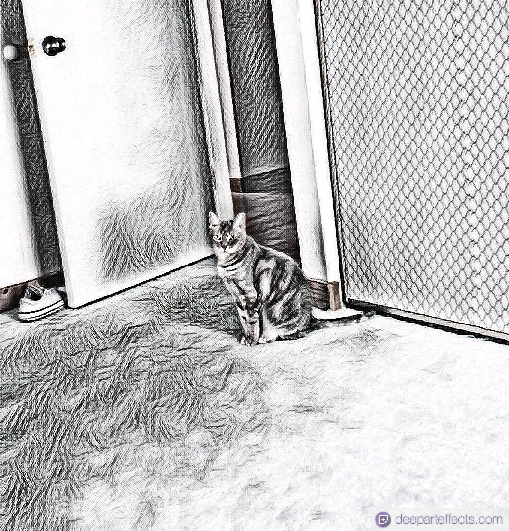 My Cat is A Cat Burglar ~ a short poem by Katrina Curtiss 7/26/2020
