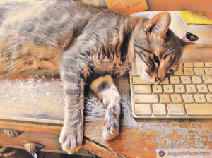My Cat And My Keyboard ~ a short poem by Katrina Curtiss 8/13/2020