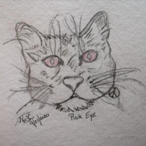 My Cat Has Pink Eye ~ A Short Poem by Katrina Curtiss 9/21/2020