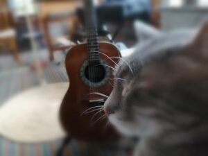 My Cat, The Therapist ~ a short poem by Katrina Curtiss 9/9/2020