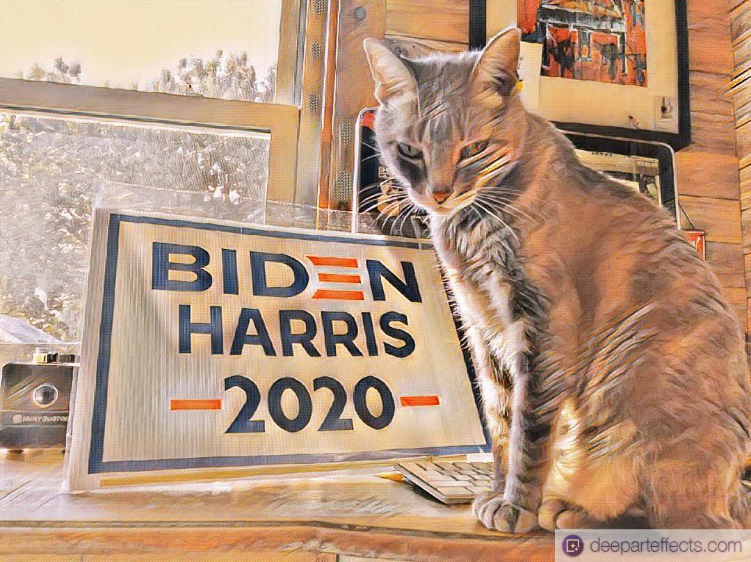 "My Cat And Her Political Sign ""Ridin With Biden"" ~ by Katrina Curtiss 9/28/2020"