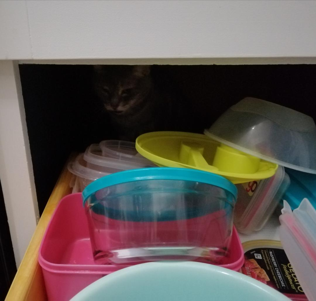 My Cat And The Tupperware Drawer ~ Katrina Curtiss 10/27/2020
