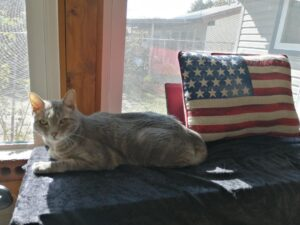 My Cat Celebrates Veterans Day ~ Katrina Curtiss 11/11/2020